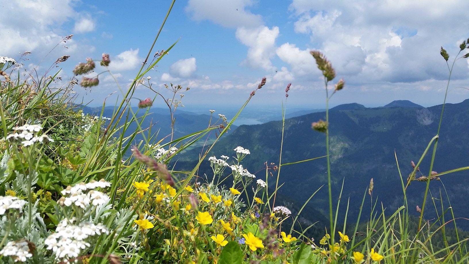 Ziele – Halserspitz (1.862m): Mittelschwere Rundtour auf den höchsten Gipfel der Blauberge